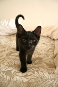 a-kitten-named-owl-141974-427-640-200x300