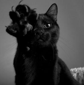 cat-claw-132453-474-480-296x300