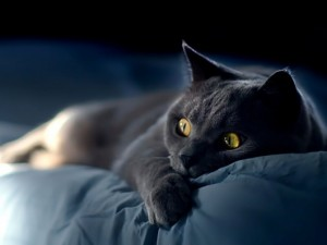 cat-itnnyeavu-228674-530-398-300x225