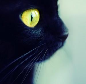 cat-p2rby00w5-88106-500-494-300x296