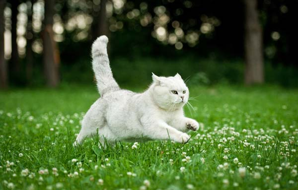 Cat-running-away-shutterstock_149320823