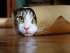 cat-wrapped-255257-500-379-300x227