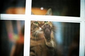 cat-x107y304-109000-530-351-300x198