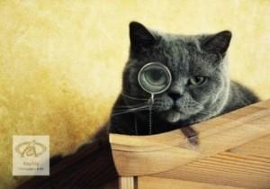 cute-cats-wearing-glasses-rpv5ti3p-241844-530-372-300x210