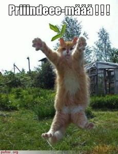 poza-amuzanta-cu-o-pisica-ce-sare-in-bratele-stapanului-si-ii-cere-acestuia-sa-o-prinda-230x300