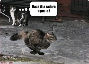 poze-amuzante-poza-amuzanta-pisica-alearga-cu-o-viteza-impresionanta-300x215