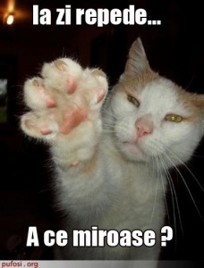 poze-amuzante-poza-amuzanta-pisica-isi-intreaba-stapanul-ce-miros-are-labuta-ei-228x300