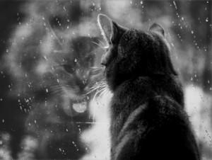 rain-rain-go-awa-93519-530-401-300x226