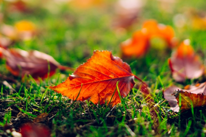 Leaf-Leaves-Orange-Grass-Nature-Macro-3000-x-2000