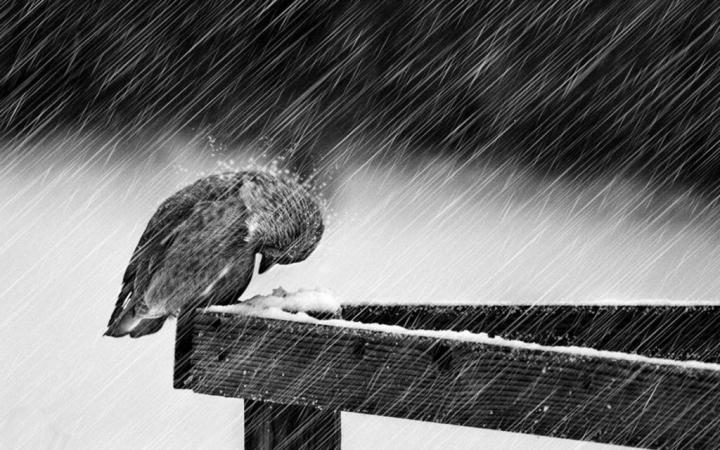 1000+ Images About Rain On Pinterest   Rain Photography, The Rain