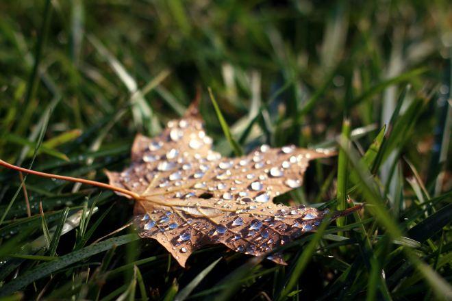 autumn-mott-rodeheaver-uCZuTa_iK_k-unsplash